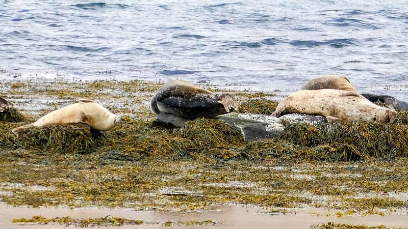 Circuit guidé en islande sur mesure dans les Westfjords, observation des phoques